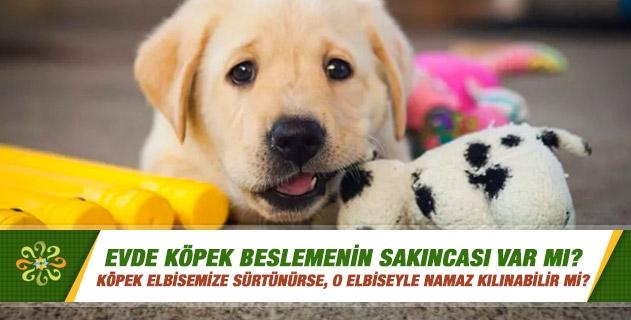 Evde, bahçede köpek beslemek namaza mani olur mu; köpek elbisemize sürtünürse, o elbiseyle namaz kılınabilir mi? İçinde köpek olan eve melek neden girmez?