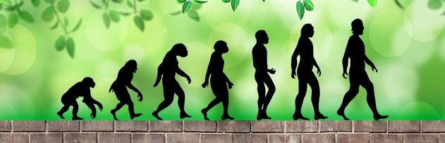 İnsanlar primatlardan (maymunlardan) mı meydana gelmiştir?