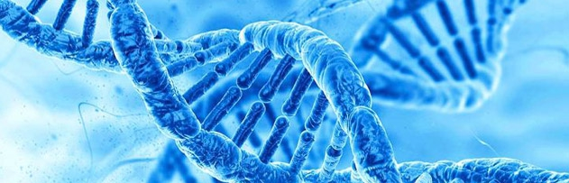 Genlerin insanın iman edip etmemesine etkisi nedir, bu durum insanın sorumluluğunu ortadan kaldırır mı? İmanın kaynağı hangisidir; akıl, mucize, gen veya psikoloji?..