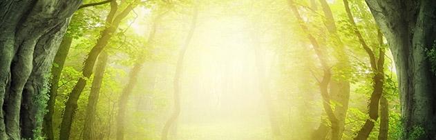 Bir insanın cenneti kazanması için mutlaka tarikata veya cemaate mensup olması gerekli midir?