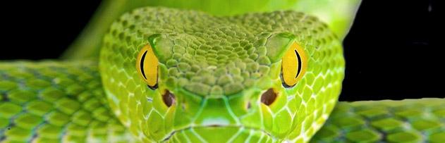 Faiz yiyenlerin karınlarına yılanlar mı dolacak?