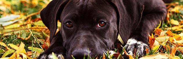"""Hadislerde geçen """"Tüm köpeklerin öldürülmesi"""" olayını anlamakta zorlanıyorum. Karıncayı bile incitmeyen Peygamber Efendimiz böyle bir emri nasıl verir?"""