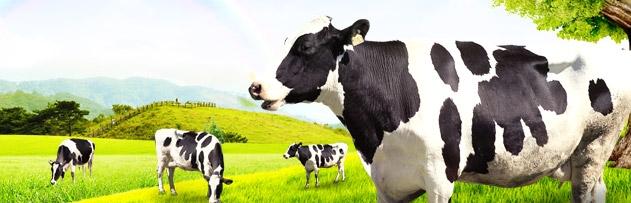 Kurban edilecek hayvanın özellikleri nelerdir? Hangi kusurlar hayvanı kurban etmeye mani olur?