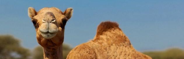 Peygamberimizin hayvanlara olan merhametini açıklar mısınız?