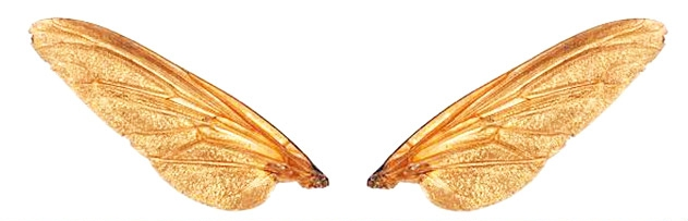 Sineğin bir kanadında zehir, diğer kanadında panzehir olduğuna dair hadis var mıdır; yorumu nasıldır?