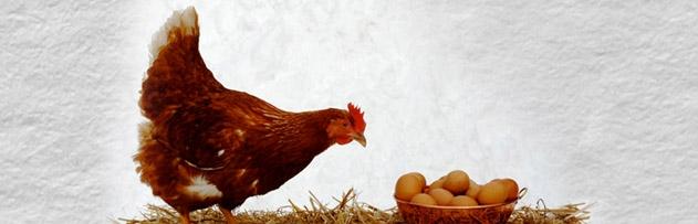 Tavukları aç bırakarak yumurtlamaya döndürmek caiz midir?