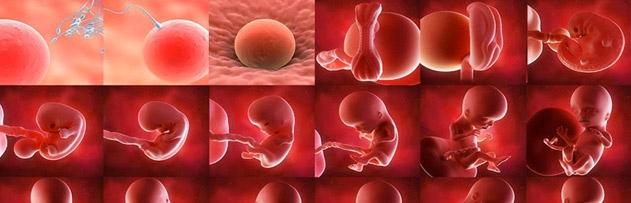 Bir bebek neden 9 aydan sonra doğuyor?