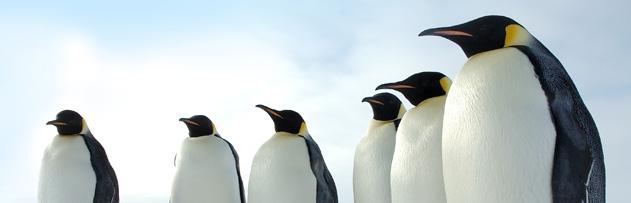Eti yenen ve yenmeyen hayvanlar nelerdir, penguen eti yenir mi?