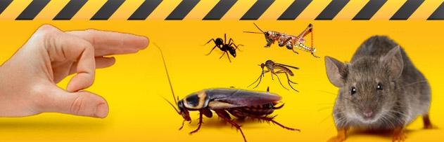 Evimizde bulunan haşereleri, sivrisinekleri, böcekleri, karıncaları veya diğer hayvanları öldürmenin günahı var mı?
