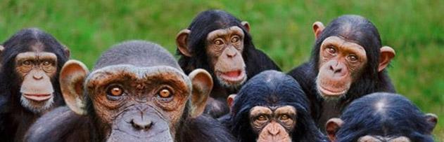İsrailoğullarından bir topluluk nasıl maymuna çevrildi?