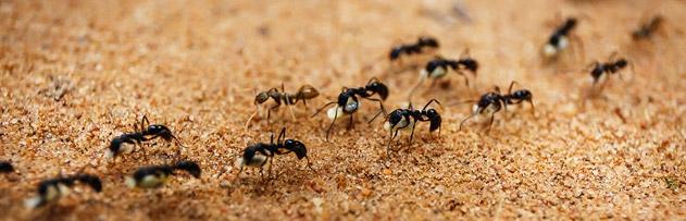 Karıncaların gelmemesi için okunacak dua var mıdır?
