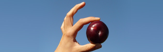 Kontrol ederken zarar gören meyveyi almamız gerekir mi?