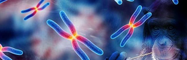 Kromozomlarımız kaynaşarak maymundan insana mı dönüştük?