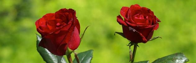 Peygamber Efendimizin torunları Hz. Hasan ve Hz. Hüseyin'i öpmesi ile ilgili hadisleri nasıl anlamak gerekir, yorumlar mısınız?