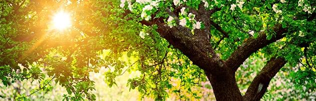 Peygamberlerin soy ağacı ve geliş sırası hakkında bilgi verir misiniz?