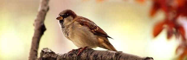 Rüya anlatılmadığı müddetçe bir kuşun ayağında durur, diye bir hadis var mı?