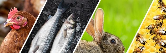 Tavuk, balık, tavşan, arıcılık, ipek böceği.. zekatı nasıl hesaplanır?
